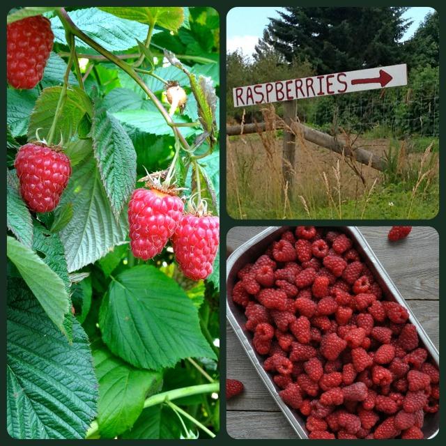 Raspberry Collage
