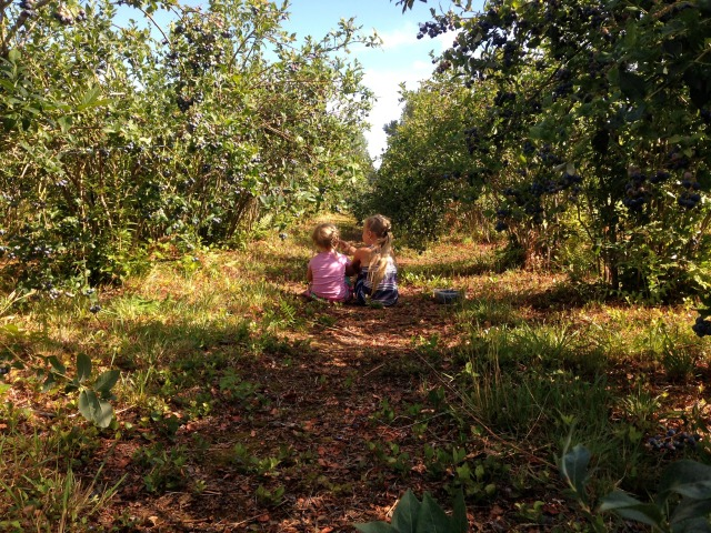 Sister Love. Taking a break in the blueberry patch.